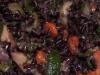 Riso Venere zucchine e gamberetti (Risotto)