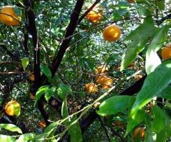 dolce ai sapori di Sicilia senza glutine